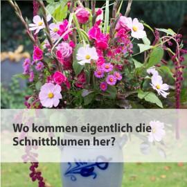 Woher kommen die Schnittblumen?